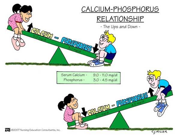 Calcium-Phosphorus-relationship