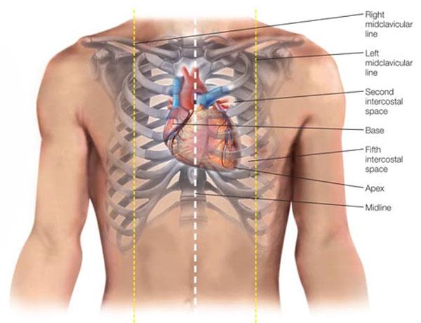 heart-position