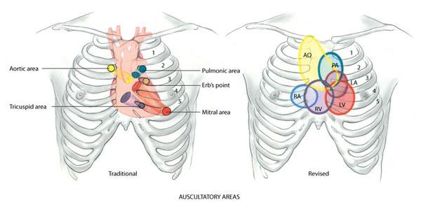 auscultatory-areas