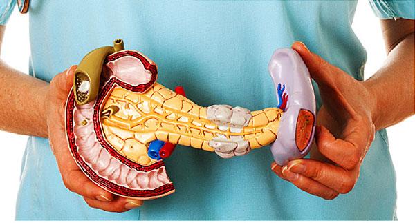 آناتومی و فیزیولوژی سیستم درون ریز (پانکراس)